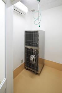 入院室(ネコ).JPG