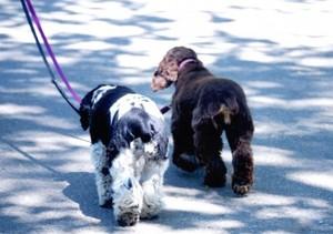 犬散歩.jpg